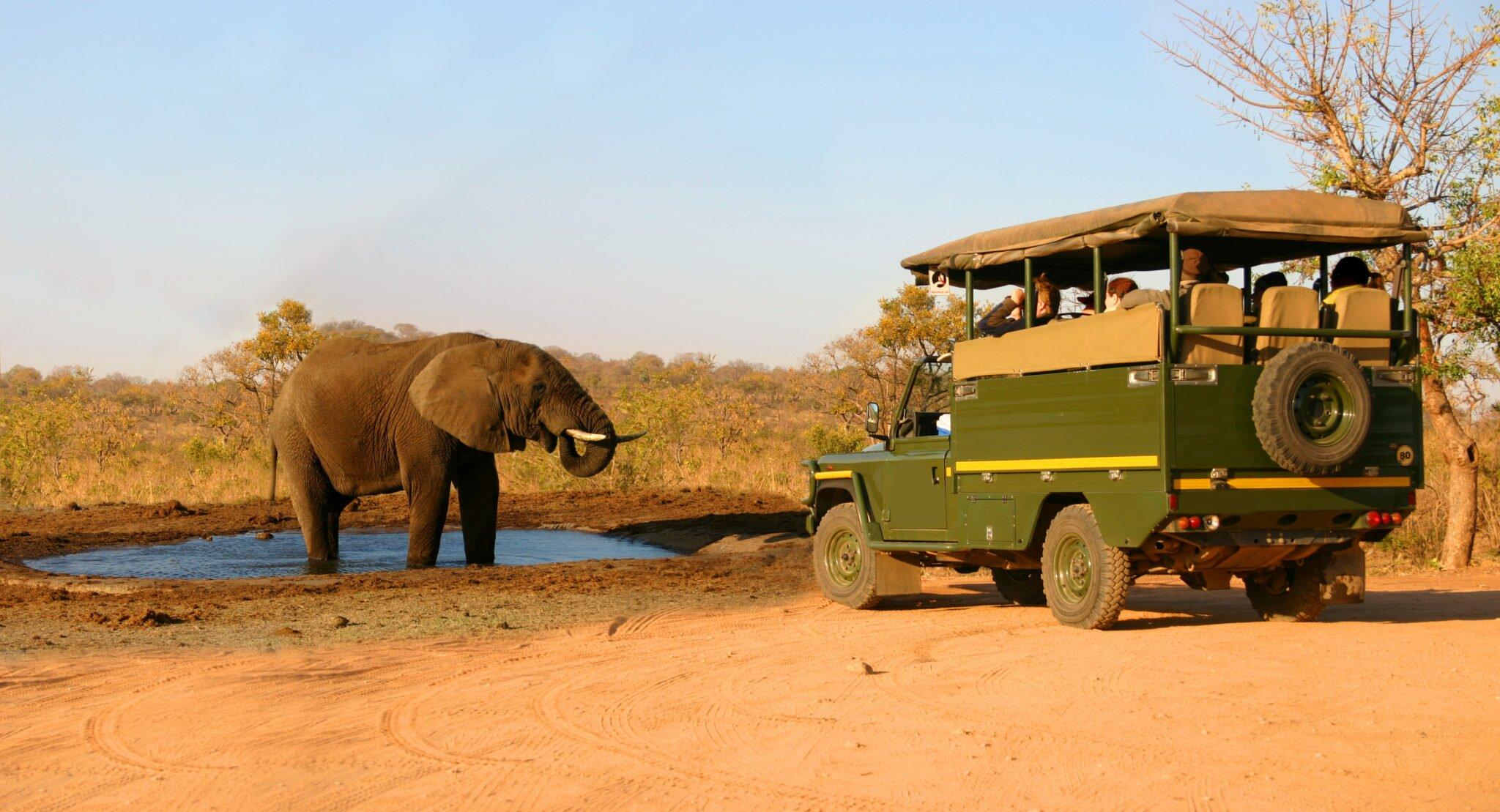 Elephant and safari jeep