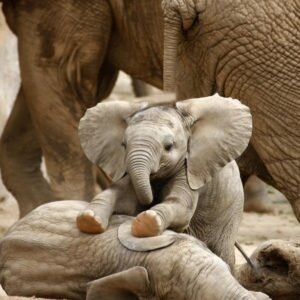 Elephant - cute baby copy