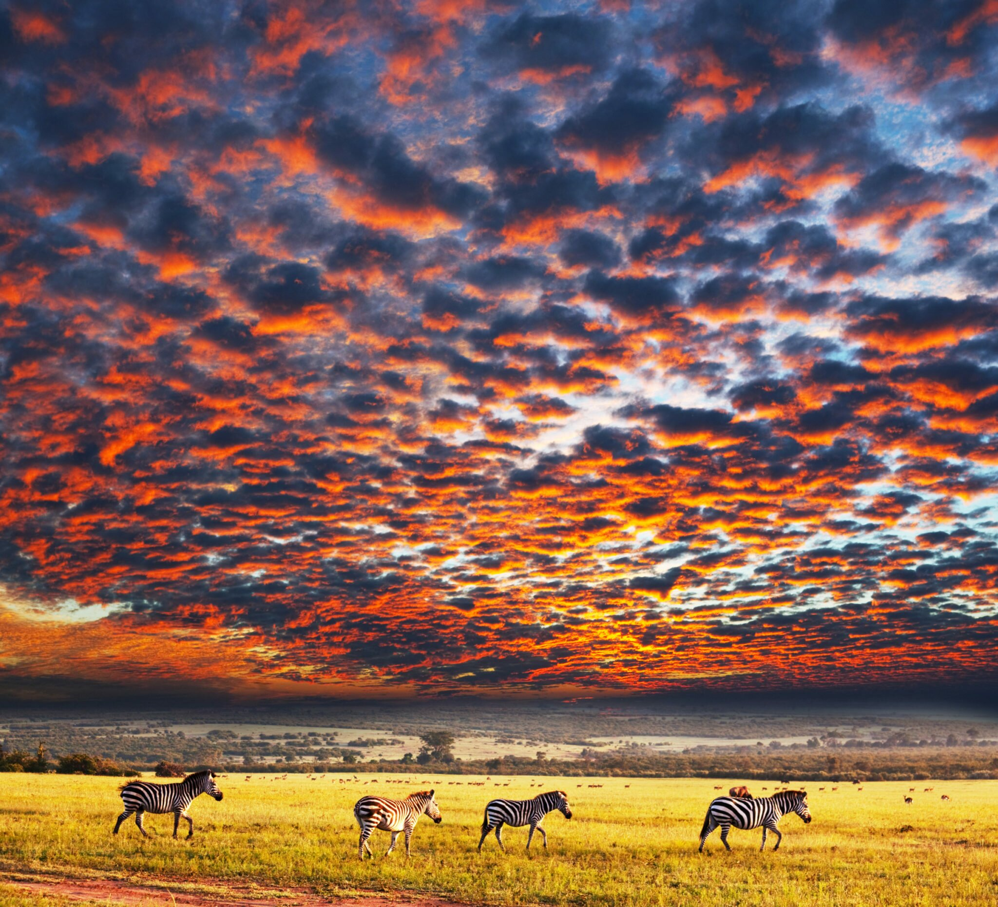 Zebras under colorful skies