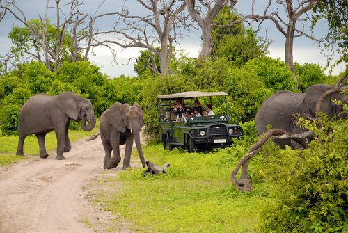Elephants+and+jeep