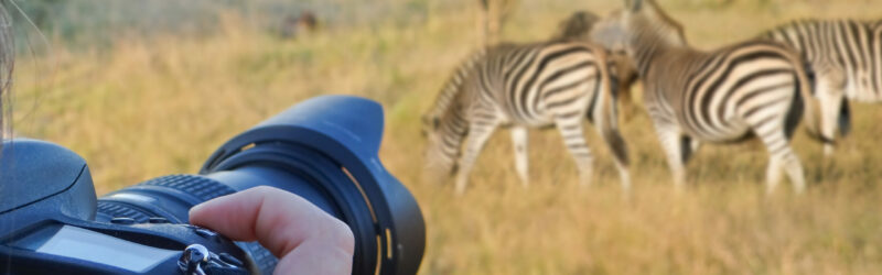 Copy of Photographer on safari with zebras