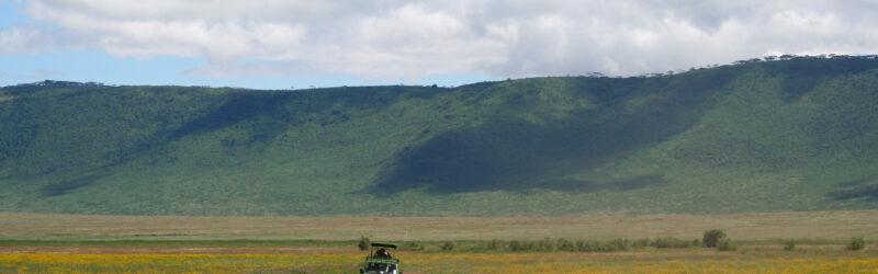 safari jeep and wildebeest