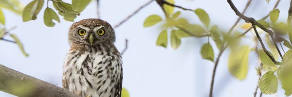 984125_FTS-BlogImages-Owl-600x200_022421