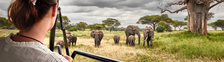 A Family of Elephants In Africa