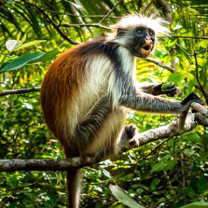 Monkey Tracking