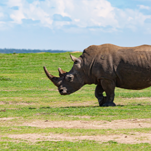Laikipia is like no other Big Five safari destination in East Africa