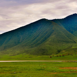 a couple of dozen black rhinos still survive in Ngorongoro Crater, a spectacular volcanic caldera that forms the centerpiece of the scenic highlands protected in the Ngorongoro Conservation Area