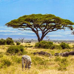 Fair Trade Safaris be quiet
