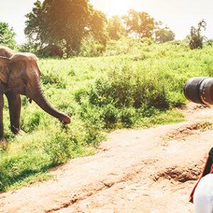 Fair Trade Safaris animals in their natural settings