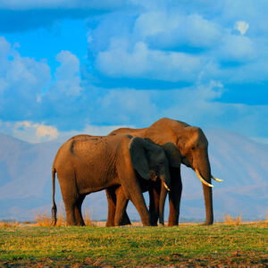 Track down the Big Five in Nairobi National Park