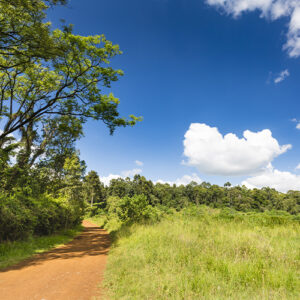 Climb to the summit of Ol Donyo Sabuk About 90 minutes' drive northeast of central Nairobi