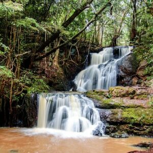 Get back to nature at the Karura Forest Reserve One of the world's largest urban forest reserves